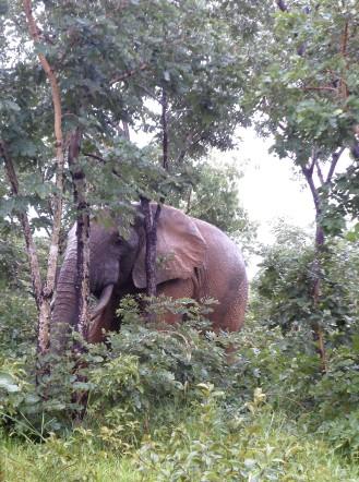 """""""Elephant"""", by Cássio Serafim, 2013"""