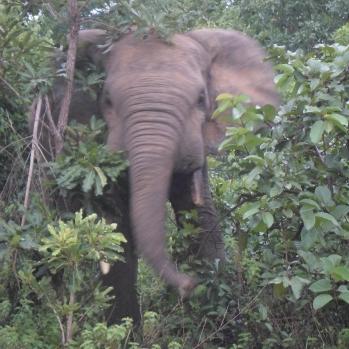 """""""Jovem elefante"""", by Cássio Serafim, Gana, 2013."""