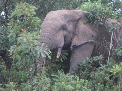 """Elefante"", by Cássio Serafim, Gana, 2013."